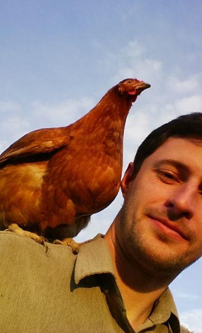 parrotchicken